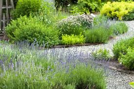 how to identify mint plants hunker