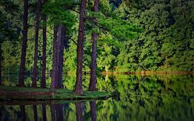 nature lake reflections wallpapers summer trees forest lake reflection spruce landscape nature