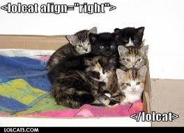 Lol Cat Meme - lolcat align cat meme cat planet cat planet