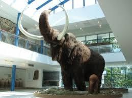 42 woolly mammoth images animals wild animals