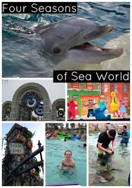 37 best family travel seaworld adventures and navigation