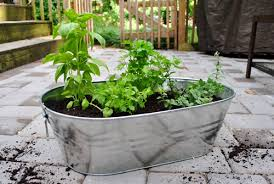 making an herb garden in a metal tub young house love