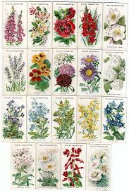 country clipart flower garden pencil and in color country