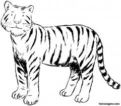 printable tiger coloring pages kids printable coloring pages