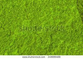 green grass yard background stock photo 464877737 shutterstock