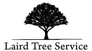 tree services stump lot clearing billings mt