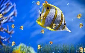 free marine aquarium animated wallpaper marine
