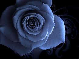 theme black rose flower blue black delightful rose flower hd blossom theme hd 16 9