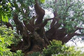 coolest looking type of tree that you seen page 3