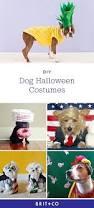 dog halloween party ideas best 20 best dog halloween costumes ideas on pinterest pet