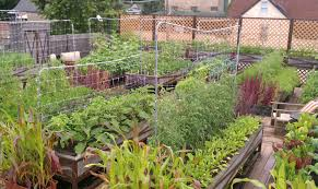 kitchen garden ideas rooftop vegetable gardens