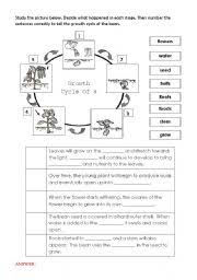english teaching worksheets the life cycle