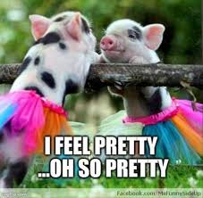 Funny Pig Memes - 15 very funny pig memes funny pigs and memes