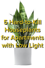 sunlight l for plants astonishing office decorating best indoor plants without sunlight