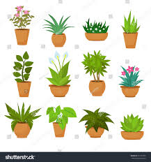 indoor outdoor landscape garden potted plants stock vector
