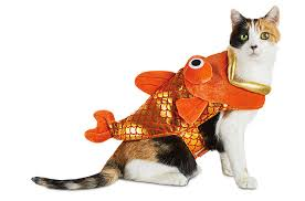 top 10 cat costumes to hiss at