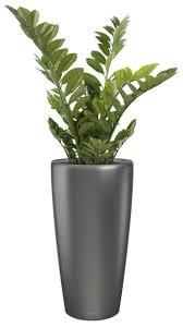 plantes pour bureau fougères semi naturelle decoration de bureau plantes de bureau
