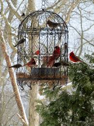 love our beautiful cardinals what a beautiful bird feeding