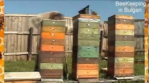 bees in backyard bees and huney bees back yard in bulgari