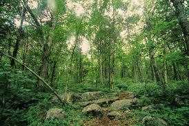 Alabama forest images Above ground wilderness brandon kowallis jpg