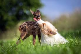 unlikely friendship between baby deer and puppy