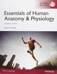 essentials of anatomy and physiology marieb 9781292057200
