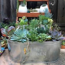 outdoor succulent garden ideas lawsonreport f9a7a8584123