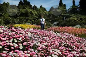 The Australian Botanic Garden Fairfax Syndication Tracey Armstrong Walk Throught The Display