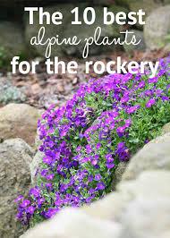 Rock Garden Plant Rock Gardening Archives Best Gardening Ideas