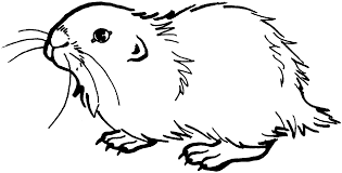 gopher black and white cartoon illustration of funny gopher animal