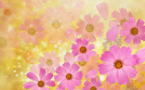 Cosmos Flower Essence - flower backgrounds cosmos flowers wallpaper high quality