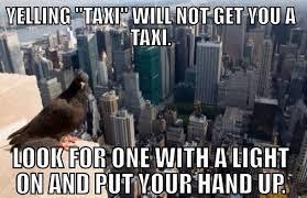 Memes New York - new york advice pigeon meme guy