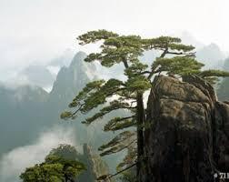 pine tree china etsy