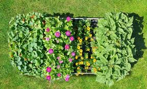 magic carpets instant edible gardens with roll out seedsheets