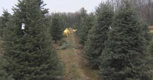 why your tree may cost more this year cbs news