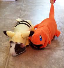 Charizard Pokemon Halloween Costume Piggies U0027 Halloween Costumes