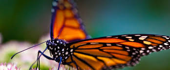 monarch butterfly shop raising butterflies cages and butterfly gifts