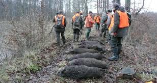 chambre froide chasse chambre froide à lunéville chasseurs de l est
