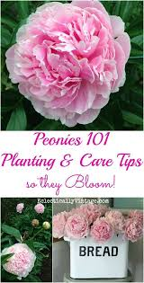 best 25 plant care ideas on pinterest plants indoor plant and