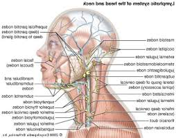 website for just anatomy learn anatomy learn