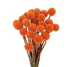 billy balls billy balls orange flower