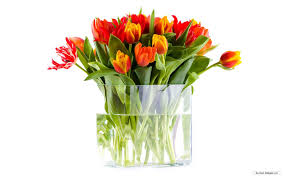 download free flower pics solidaria garden