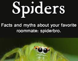 Spider Bro Meme - spiders facts and myths about your favorite roommate spiderbro