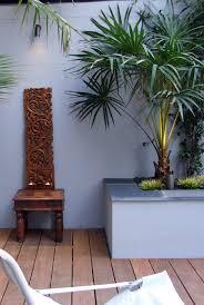 livistona australis the cabbage tree palm in a hstead
