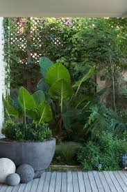 Tropical Patio Design Tropical Foliage In Beautiful Stone Container With Decorative