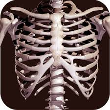 Google Human Anatomy Osseous System In 3d Anatomy Android Apps On Google Play