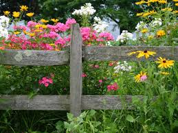 List Of Flowers by List Of The Best Perennial Flowers Diy