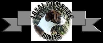 boxer dog training tips boxer training tips
