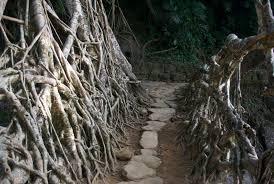 evan hastings living root bridge