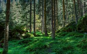 forest hd apk free best forest wallpaper
